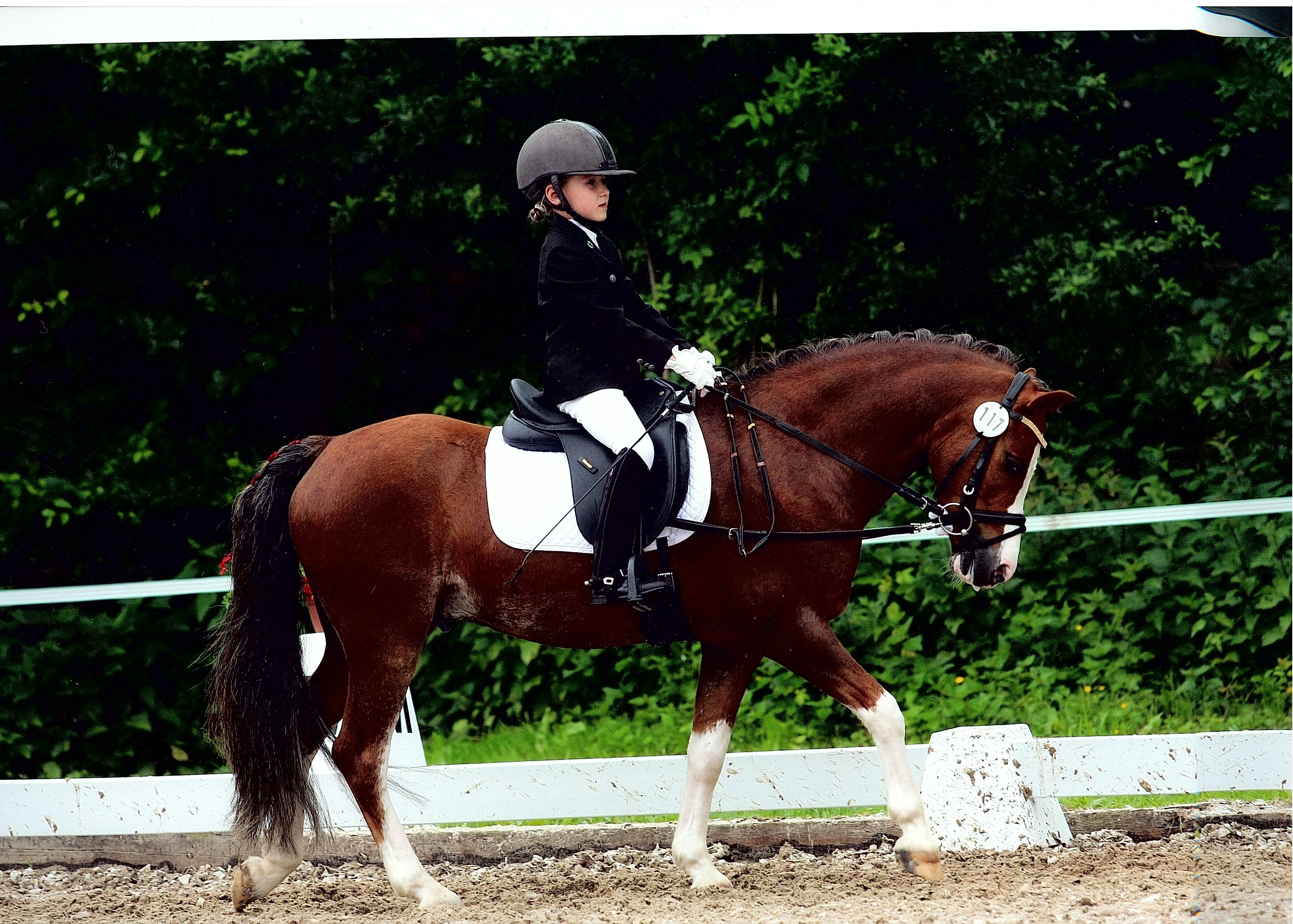 Pferdepensionsverträge Pferdeeinstellverträge In Der Praxis