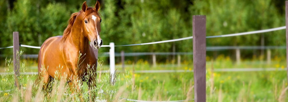 Jennifer Stoll - Kanzlei für Pferderecht